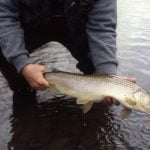 brown trout art teter guide service