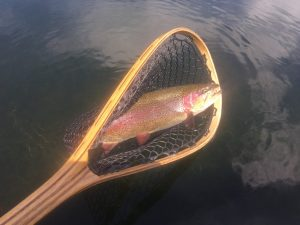 Fall River Rainbow Trout - Fly Fishing Guide Fall River