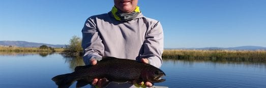 Fall River rainbow trout fly fishing