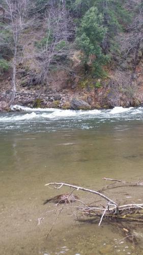 Upper Sacramento River - fishing report