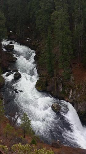 McCloud River - fishing report
